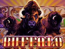 Buffalo – виртуальный слот: играть на зеркало онлайн